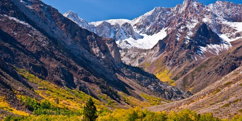 Fall colors in the Eastern Sierras